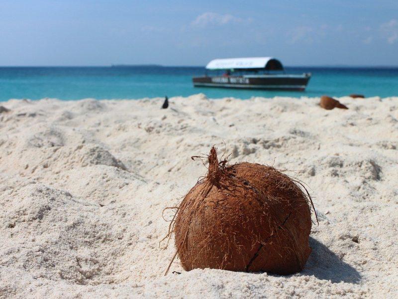 Coconut 1577282 1280